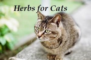 herbsforcats2